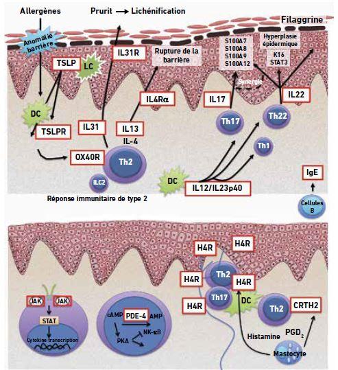 traitements biologiques et petites molecules